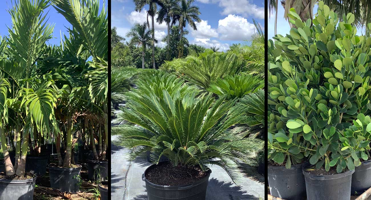 plants-west-palm-beach