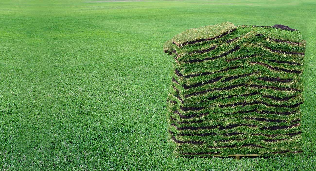 sod-west-palm-beach